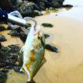 奈多のサーフで【ショアジギング】ネリゴが釣れた!