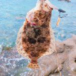 釣り記録 in 【志賀島】