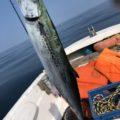 【津屋崎レンタルボート】秋の2馬力ボート釣行 【サゴシ釣れた】